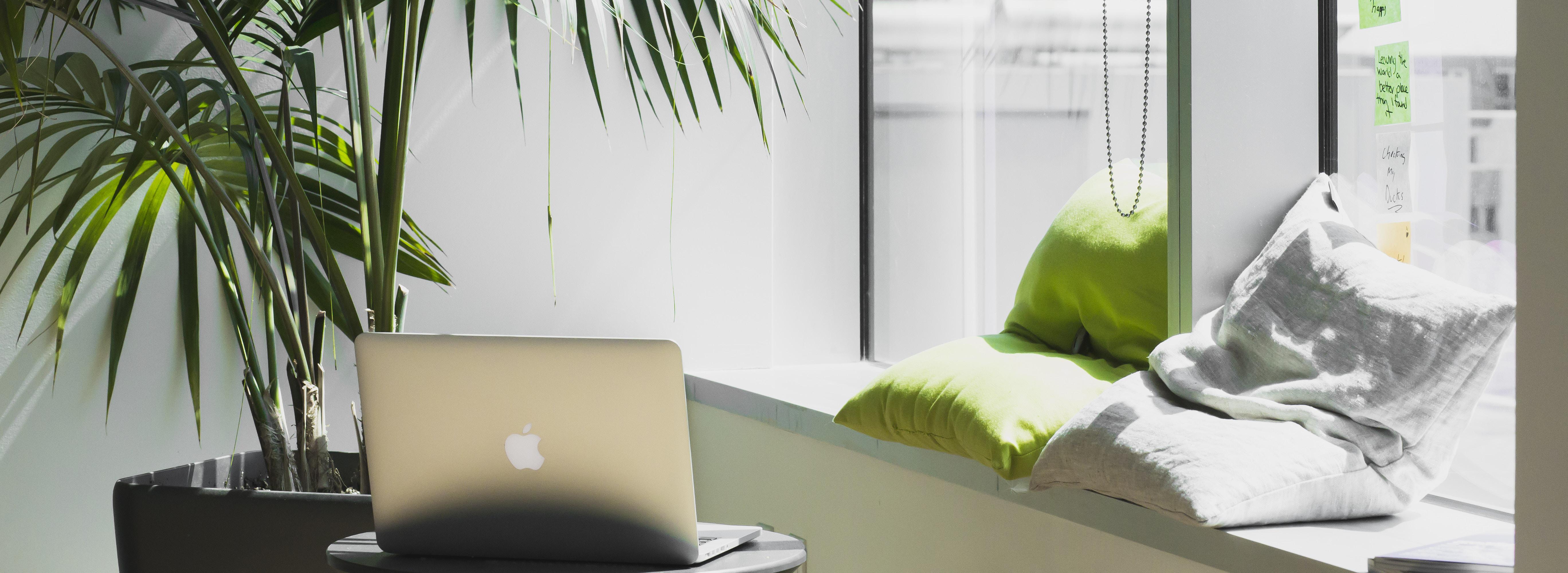 La décoration pour plantes partout dans la maison